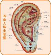 耳朵人体全息图