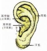 耳朵反应人的性格和疾病